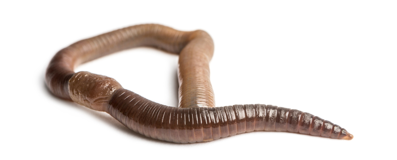 Sex With Worm 53